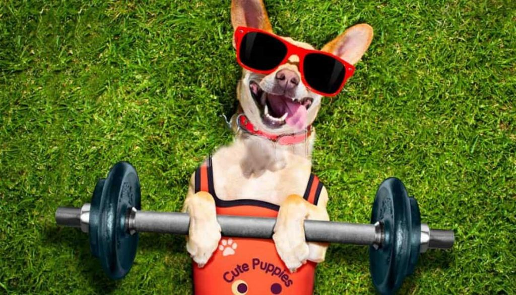 Exercise Methods, including your Pet